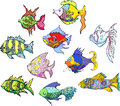 Motley tropical fish Royalty Free Stock Images