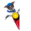 Motorbike dog beside a blank white banner Royalty Free Stock Image