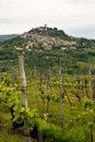 Motovun Royalty Free Stock Images