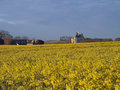 Motte castle  from a rapeseed field ,Usseau Stock Photography