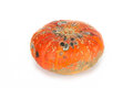 Mouldy pumpkin Royalty Free Stock Photo
