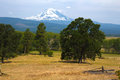 Mount Adams from Trout Lake Royalty Free Stock Photography