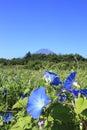 Mount Fuji и цветок Стоковое Фото