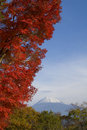 Mount Fuji in Fall XI Royalty Free Stock Images