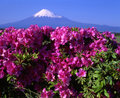 Mount Fuji L Royalty Free Stock Images