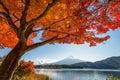 Mount Fuji with maple tree Royalty Free Stock Photo