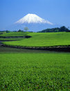 Mount Fuji XI Royalty Free Stock Photo