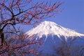Mount Fuji XXIII