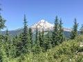 Mount Hood Royalty Free Stock Photo