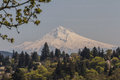 Mount Hood Royalty Free Stock Photo