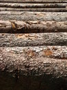 Mount Pilatus Logs 01 Stock Photography
