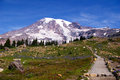 Mount rainier a trail heads through a meadow to Stock Photography