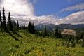 Mount Ranier National Park, Washington State Royalty Free Stock Photo
