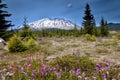 Mount Saint Helens peak Royalty Free Stock Photo
