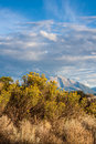 Mount sopris with blooming sagebrush in foreground vertical view of colorado distance yellow and beautiful cloudscape Royalty Free Stock Image