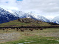 Mount sunday lord of the rings rohan new zealand capital edoras Royalty Free Stock Image