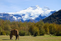Mount Tronador - Patagonia Royalty Free Stock Photo