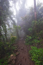 Mount warning in fog very cool walk the up mt nsw Royalty Free Stock Images