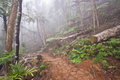 Mount warning in fog very cool walk the up mt nsw Stock Photography
