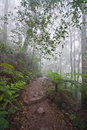 Mount warning in fog very cool walk the up mt nsw Stock Photos