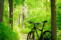 Mountain bike on the trail in the forest beautiful green summer Stock Photos