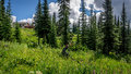 Mountain Biker coming Down through the Meadow with Alpine Flowers Royalty Free Stock Photo