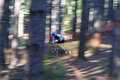 Mountain biker a male downhill goes down the hill amongst the trees Stock Photos