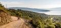 Mountain biker riding on bike in summer sunset woods Royalty Free Stock Photo