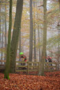 Mountain bikers Stock Image