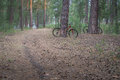 Mountain bikes parked in the woods on a trail at sunrise Royalty Free Stock Photo