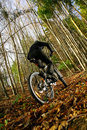 Mountain Biking  Stock Photography