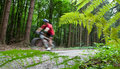 Mountain biking in a forest Royalty Free Stock Photos