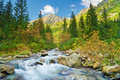 Mountain brook landscape Carpathian Mountains trees stream Royalty Free Stock Photo