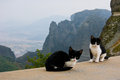 Mountain cats the only predators of the meteora mountains are the greece Royalty Free Stock Photo