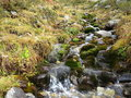 Mountain creek flow a flowing over small cascades in between an alpine meadow austrian alps at m above sea level Royalty Free Stock Images
