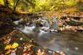 Mountain creek and golden autumn leaves with small waterfalls cascade Stock Photography