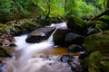 Mountain Creek In Green Forest Royalty Free Stock Photo