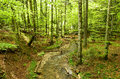 Mountain creek runs through primeval beech forest in late spring Stock Image