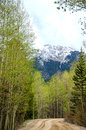 Mountain dirt road a colorado rocky winding through aspen trees and snow capped in the background Royalty Free Stock Photo
