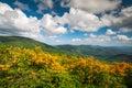 Mountain Flame Azalea Spring Flowers Scenic Landscape Appalachia Royalty Free Stock Photo