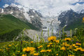 Mountain flowers Royalty Free Stock Photography