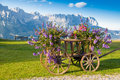 Mountain flowers cart with and alps mountains in background Royalty Free Stock Photography