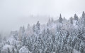 Mountain forest in dense winter fog Royalty Free Stock Photo