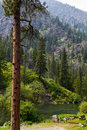 Mountain Forest and River Landscape Royalty Free Stock Photo