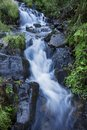 Mountain Forest Stream