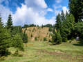 Mountain forest view of a from bucegi Stock Photo