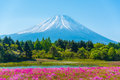 Mountain Fuji with Blurry foreground of pink moss sakura Royalty Free Stock Photo