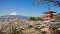 Mountain Fuji and Chureito red pagoda with cherry blossom sakura Royalty Free Stock Photo