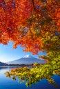 Mountain fuji with red maple in Autumn, Kawaguchi Lake, Japan Royalty Free Stock Photo