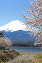 Mountain fuji in spring cherry blossom sakura Stock Image